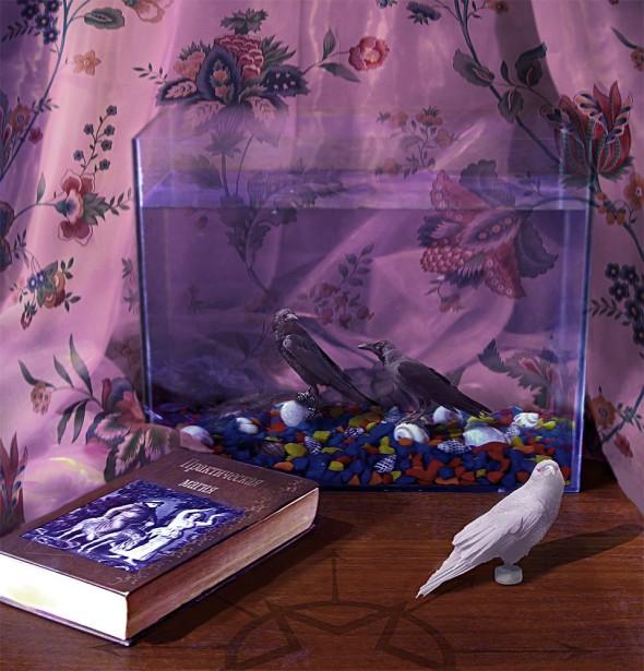 Аквариум с подводными птицами, коллаж